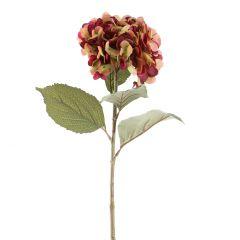 Hortensie Herbst, weinrot, 82 cm