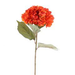 Hortensie Herbst, orange, 82 cm