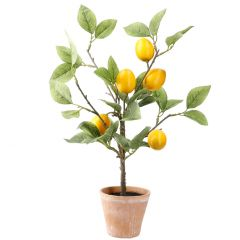 Zitronenbaum im Topf, 43 cm