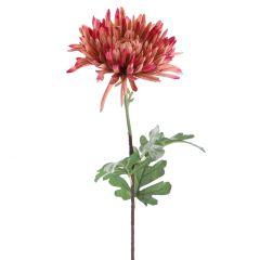Chrysantheme Herbst, altrosa, 70 cm