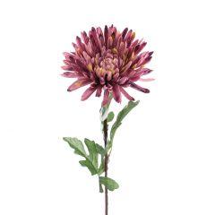 Chrysantheme Herbst, lila, 70 cm