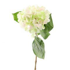 Hortensie Anni, grün, 60 cm