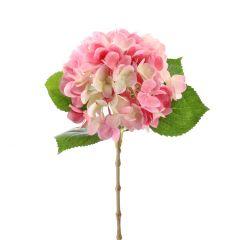 Hortensie Anni, pink, 60 cm