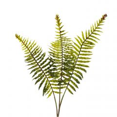 Farn, 3 Zweige, grün, 54 cm