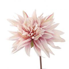 Dahlie Herbst, rosa/lila, 27 cm