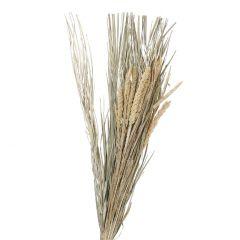 Gräser Natur, Bündel, Hirse, 85 cm
