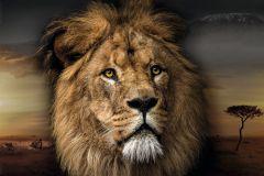Poster Lion Design, Nr. 188