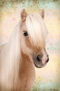 Poster Sweet horse, Nr. 198