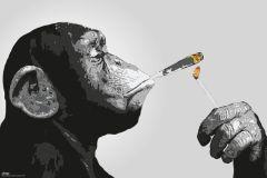 Poster Steez - smoking Affe, Nr. 226